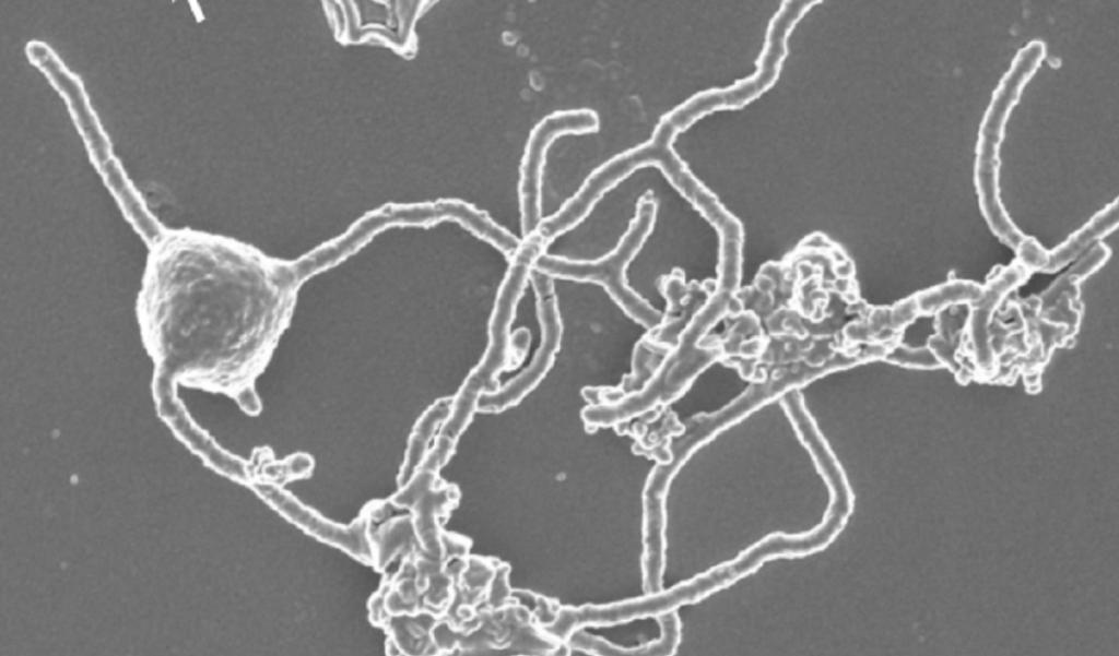 Científicos logran cultivo de microorganismos similares a los que dieron origen a la vida - Foto de Nature