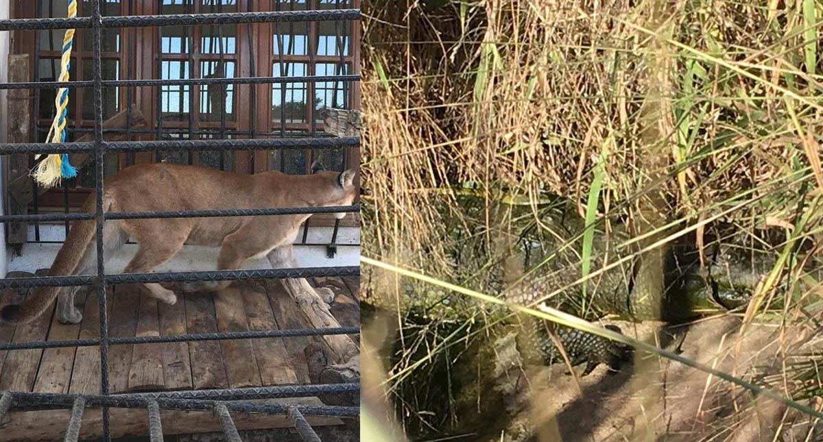 Cateo Oaxaca casa armas animales exóticos 2