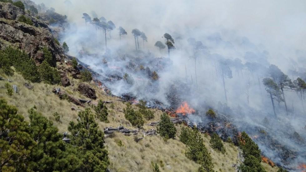 Incendio en Parque Nacional Cofre de Perote deja daños en 20 hectáreas - Foto de @billieparkernot