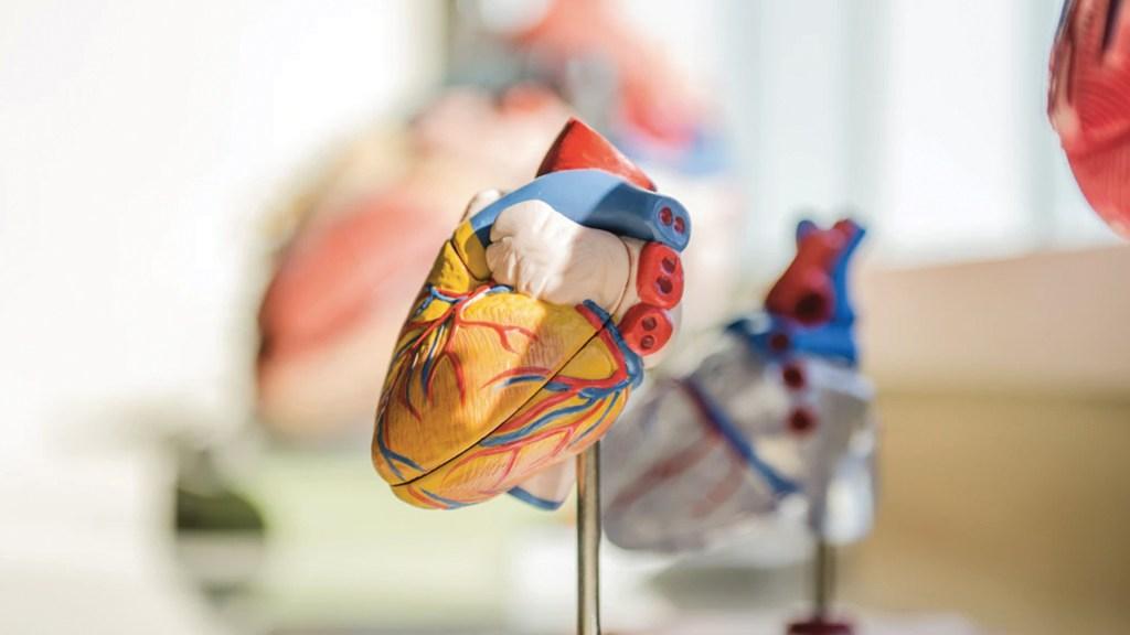 Exceso de grasa en la cintura incrementa riesgo de sufrir ataques cardíacos - Foto de jesse orrico @jessedo81
