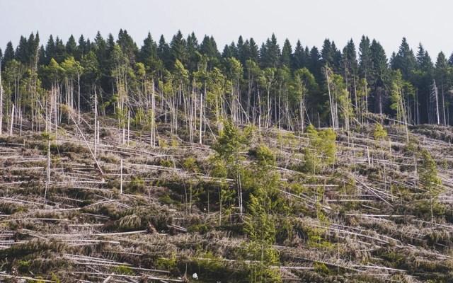 Crisis climática amenaza más a la biodiversidad que la deforestación - Foto de Massimo Rivenci @massimo_rivenci
