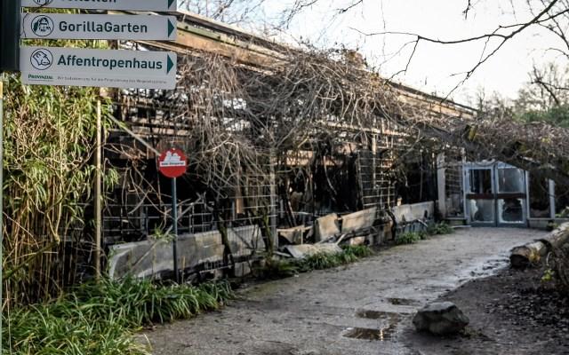 Incendio en zoológico de Alemania mata a 30 animales en Año Nuevo - El incendio en el zoológico de Krefeld inició en el tejado del área de primates. Foto de EFE