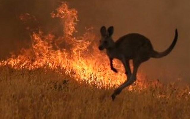 Declaran en Nueva Gales del Sur emergencia de siete días por incendios - Declaran emergencia de siete días en área de incendios en Australia