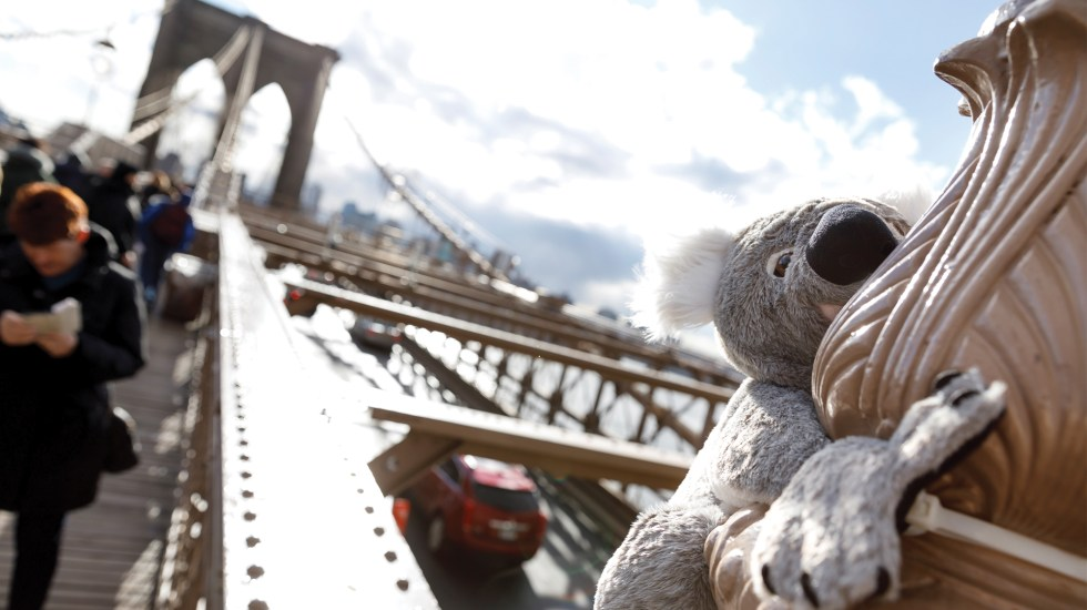 Koalas de peluche invaden Nueva York para apoyar a Australia - Foto de EFE