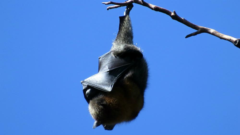 Murciélagos, con 'excepcional inmunidad' ante el coronavirus - Foto de Sally Dixon para Unsplash