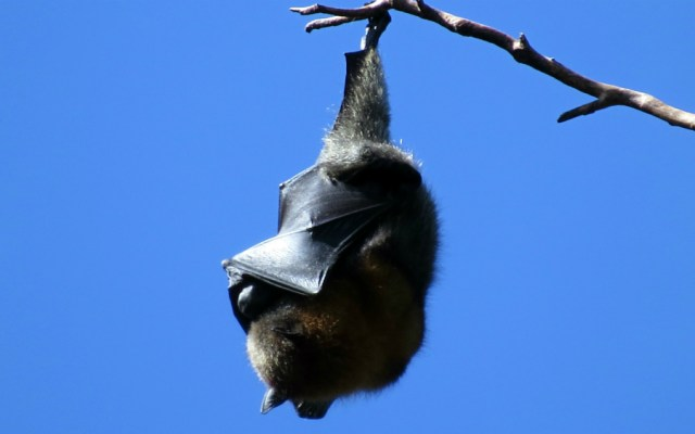 Piden no especular acerca de que murciélagos son transmisores del coronavirus - Foto de Sally Dixon para Unsplash