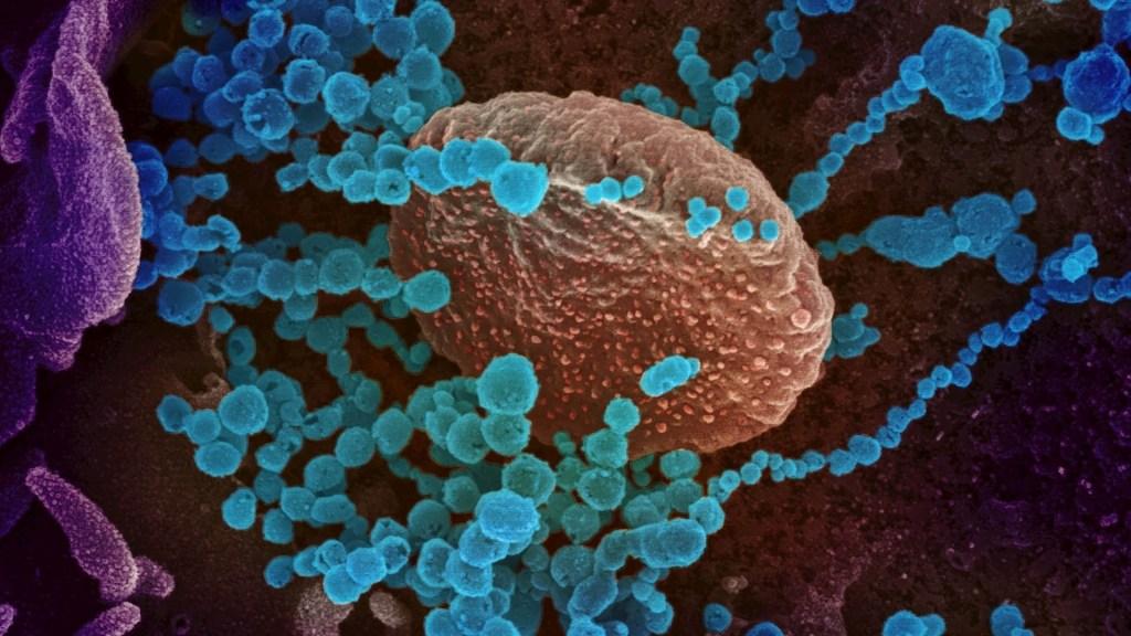 Sitio web sobre coronavirus de Google anunciado por Trump está en etapa temprana - Coronavirus Covid-19 imagen células