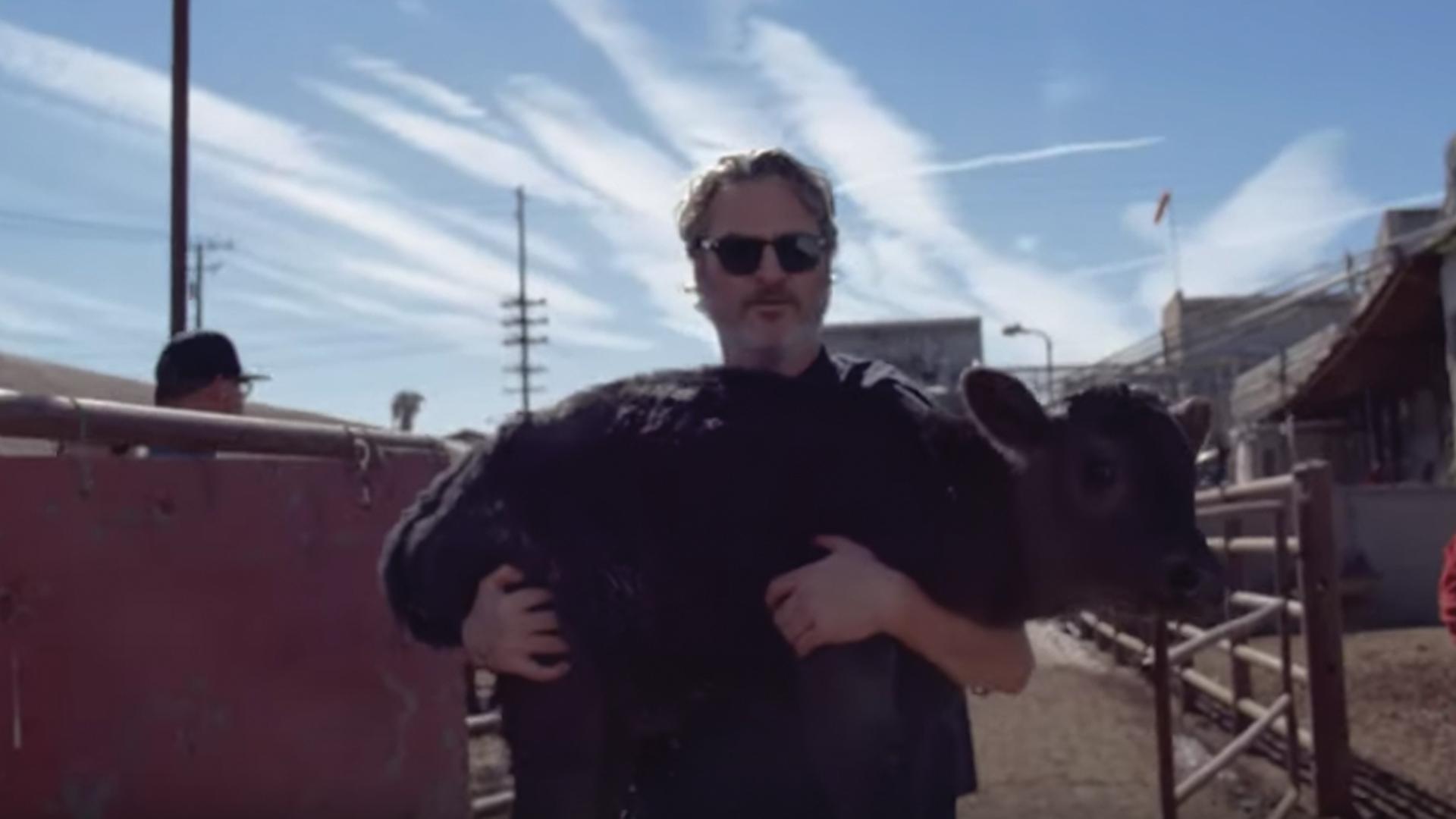 Joaquin Phoenix impidió que una vaca y su cría fueran sacrificadas