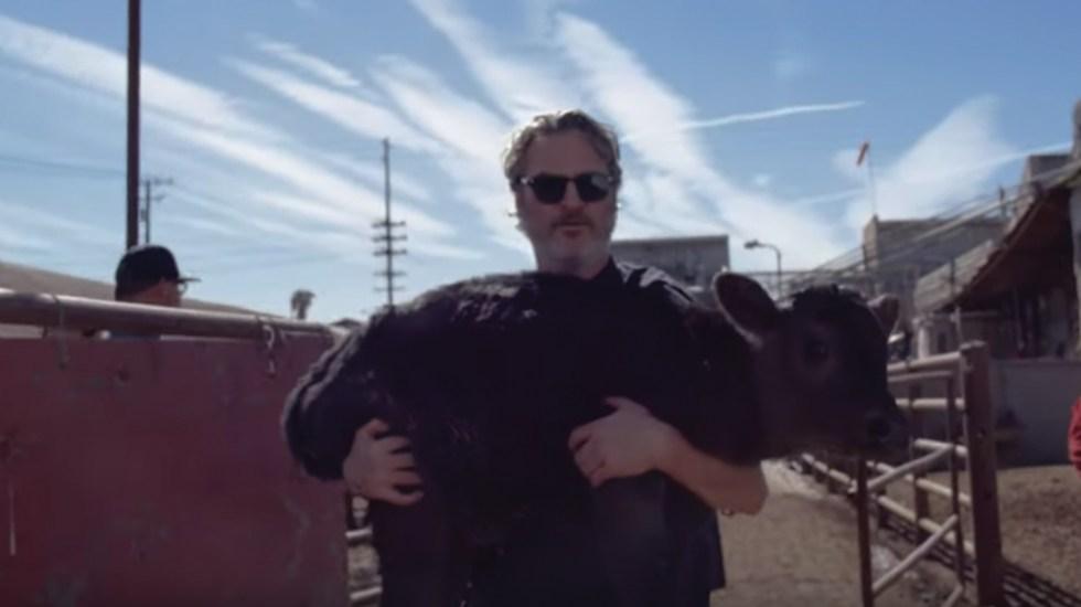 #Video Joaquin Phoenix rescata una vaca y cría de rastro en California - Captura de pantalla