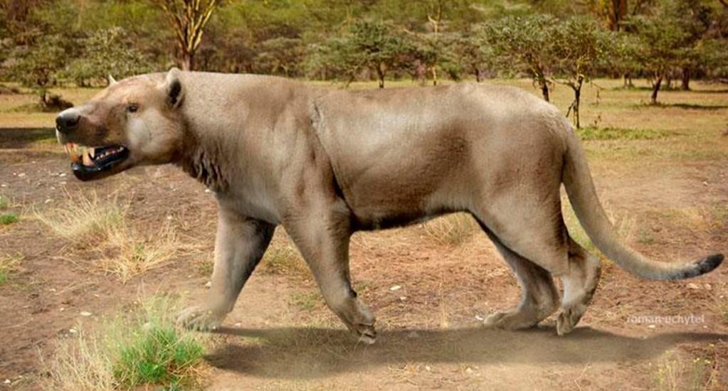 Reconstruyen dieta de vertebrados prehistóricos gracias a esmalte dental - Megistotherium o 'bestia quebrantahuesos'. Foto Especial