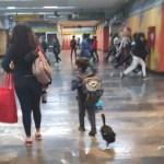 Niño pasea a pato con tenis en Metro de la Ciudad de México