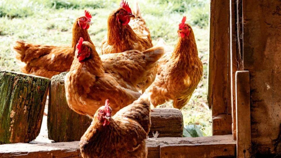 China registra un brote de gripe aviar en zona cercana a foco del coronavirus - Foto de Brett Jordan para Unsplash