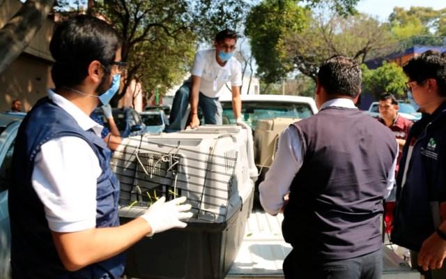 Detienen en la capital a hombre que transportaba 76 perros en un camión - Rescate de perros en la colonia Nueva Vallejo de la alcaldía GAM. Foto de @PAOTmx