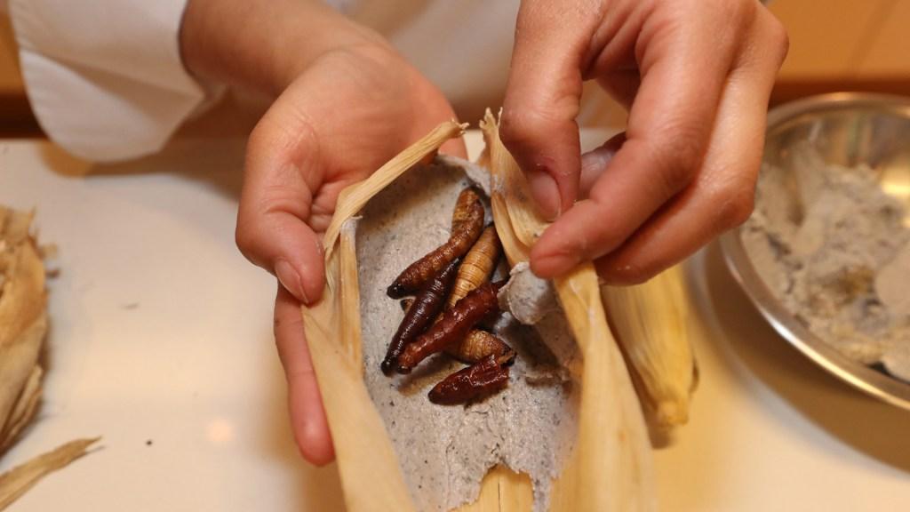Tamales con insectos, la opción nutritiva para festejar el Día de la Candelaria - Tamales con insectos. Foto de EFE