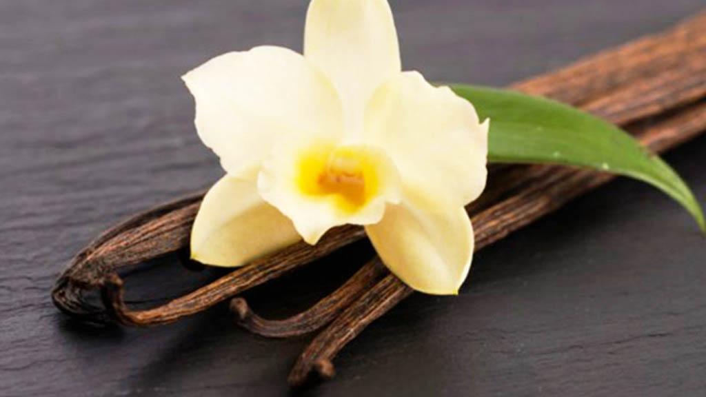México es clave en rescate de la producción de vainilla natural - Vainilla planta