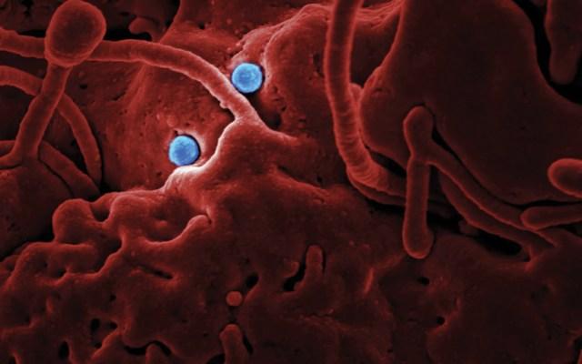 Dedos y uñas podrían transmitir VPH - Foto de CDC @cdc