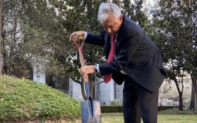 AMLO planta una ceiba en el jardín de Palacio Nacional - AMLO Andrés Manuel López Obrador Ceiba siembra