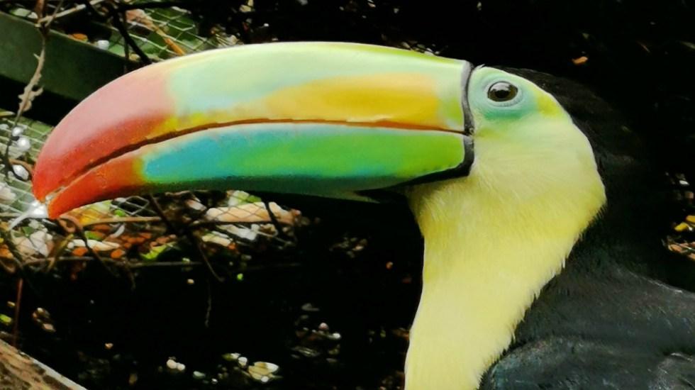 Grave la pérdida acelerada de especies en el planeta, afirma especialista de la UNAM - Foto de UNAM