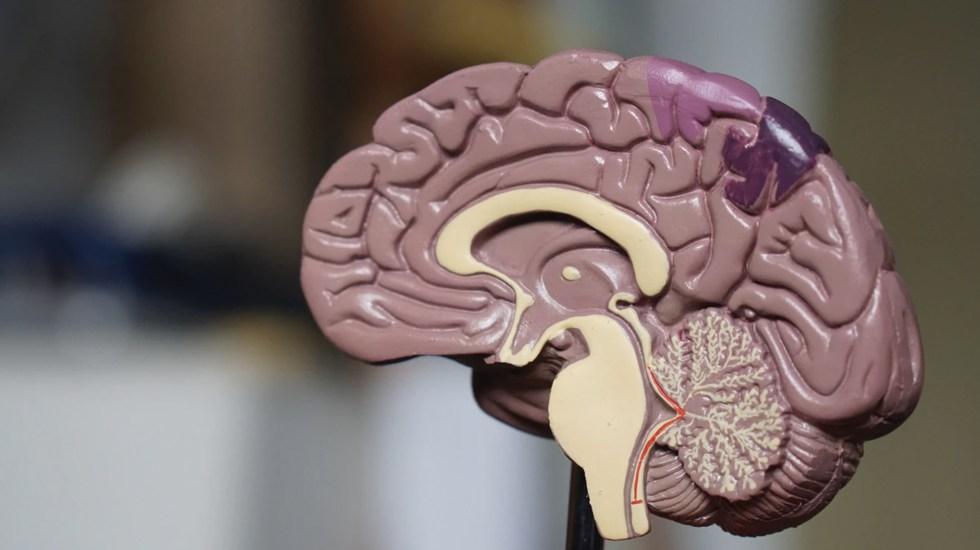 COVID-19 no infecta el cerebro, pero puede causar daño neurológico - cerebro