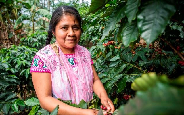 Campesinas mexicanas se empoderan a través del cultivo de café - Foto de EFE.