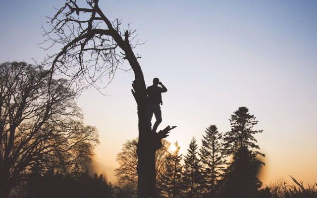 Ancestros humanos de hace dos millones de años trepaban árboles - Hombre trepando árbol. Foto de Marvin Meyer / Unsplash