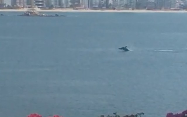 Graban ballena en playa desierta de Acapulco - Foto de captura de pantalla
