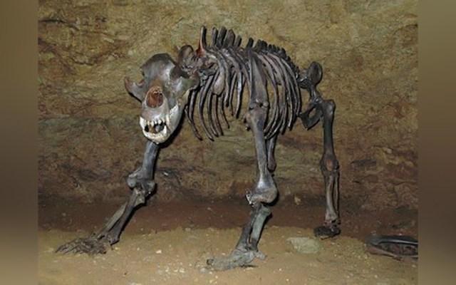 Dieta vegetariana habría acabado con los osos de las cavernas, revela estudio - Un nuevo estudio revela una nueva hipótesis que puede explicar la extinción de los osos de las cavernas, durante el último máximo glacial del Pleistoceno