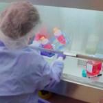 Vacuna de COVID-19 obtiene resultados prometedores en ratones - Vacuna de COVID-19 obtiene resultados prometedores en ratones