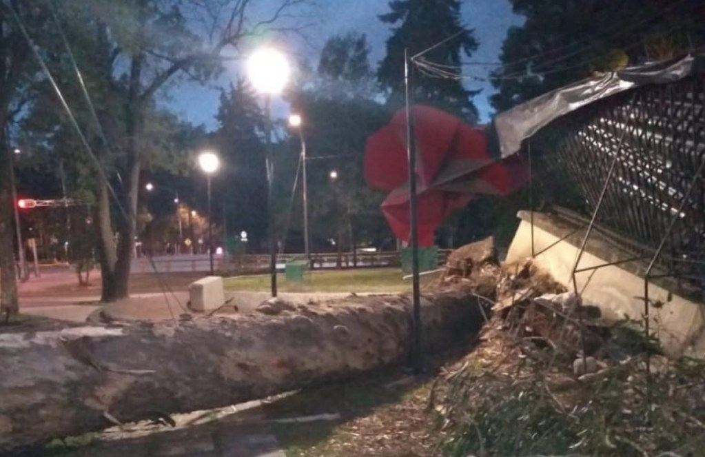 Bomberos retiran árbol que cayó sobre barda del Bosque de Chapultepec - Foto de Bomberos de la Ciudad de México