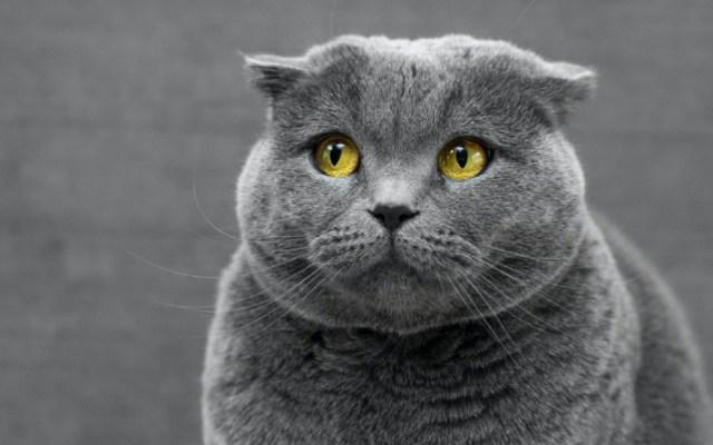 Gatos son especie más susceptible al COVID-19, afirma la OMS - Foto de Max Baskakov para Unsplash