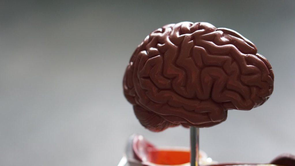 Descubren tratamiento para un tipo de tumor cerebral pediátrico - Foto de Robina Weermeijer