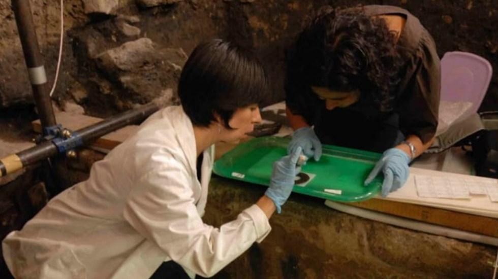 Hallan restos de pepinos de mar en ofrenda mexica