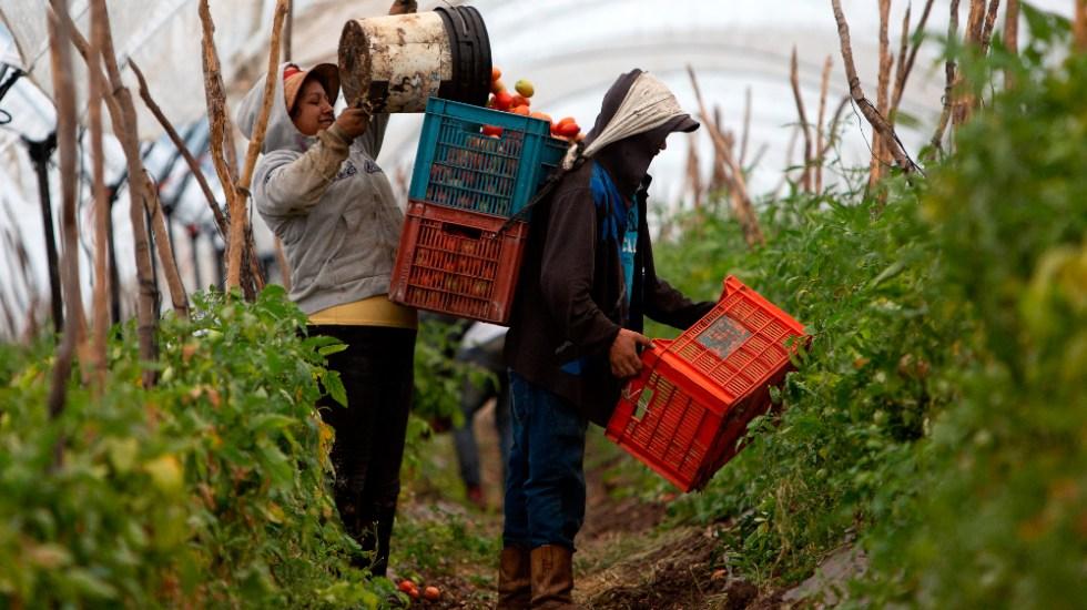 Pandemia, T-MEC y tensión con el gobierno marcaron el 2020 del campo mexicano - campo mexicano agricultura