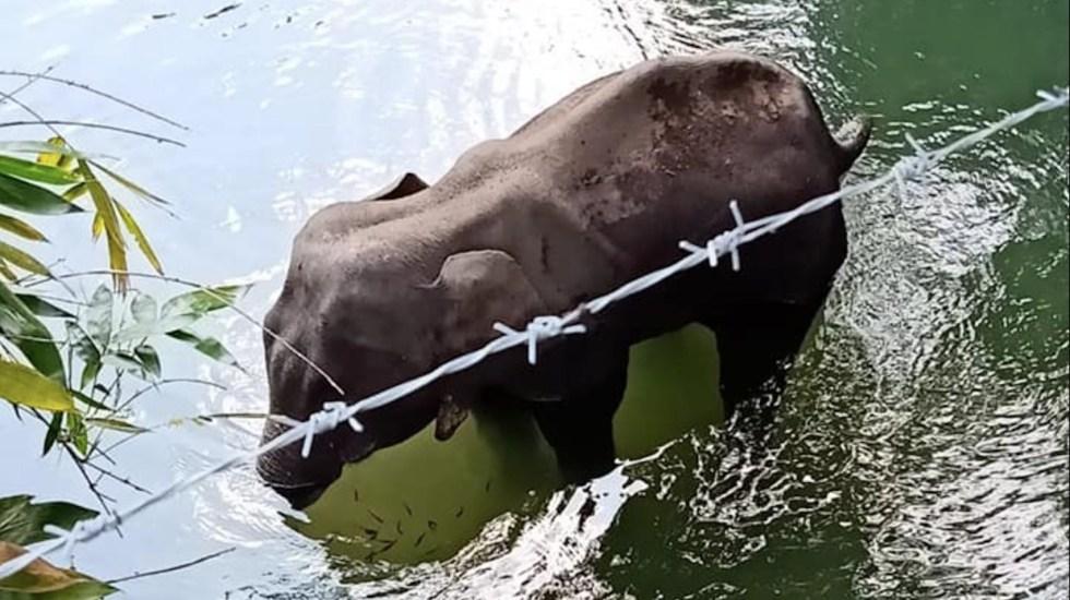 Elefanta muere tras comer piña con explosivos en India - Foto de Facebook Mohan Krishnan