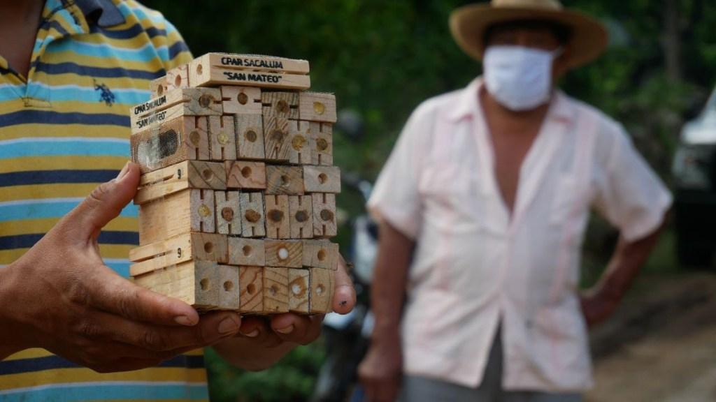 Apoyarán a productores y apicultores de la Península de Yucatán afectados por 'Cristóbal' - Entrega de abejas reina en Yucatán tras paso de la tormenta Cristóbal. Foto de @MauVila