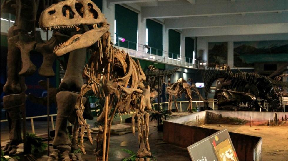 Estudio revela que dinosaurios pudieron ser diminutos en sus orígenes - Foto de EFE