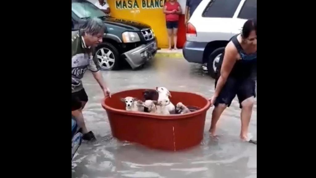 #Video Familia traslada a perros en tina durante inundación en Reynosa - Perros rescate Reynosa Hanna
