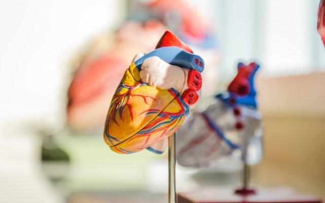 Infección por COVID-19 causaría daños cardiacos en personas con hipertensión - Foto de jesse orrico para Unsplash