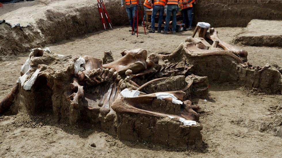 Desvela el aeropuerto de Santa Lucía el hallazgo paleontológico más importante en América Latina - Esqueleto de mamut hallado en el que será el Aeropuerto Internacional de Santa Lucía. Foto de EFE