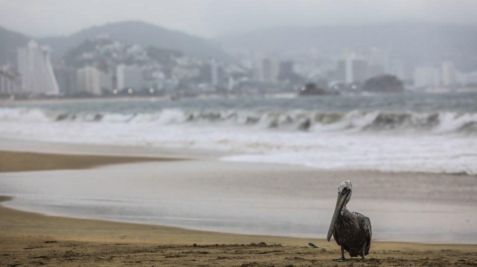 Temporada 2021 de ciclones del Pacífico estará cerca del promedio - Genevieve Acapulco Guerrero Huracan 3 ciclones