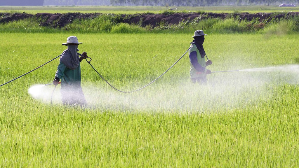 EE.UU. denuncia bloqueo agrícola de México; AMLO responde que no se permitirá el glifosato - Foto ilustrativa del campo en vivosano.org.
