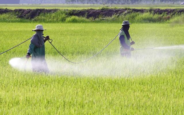 Ordena INAI que Semarnat informe sobre importación de glifosato - Foto ilustrativa del campo glifosato