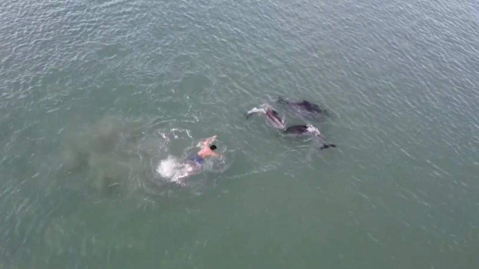 #Video Manada de delfines en playa de Nueva Zelanda atrae a bañistas - Playa Nueva Zelanda delfines manadaPlaya Nueva Zelanda delfines manada