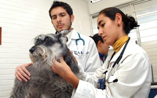 Pese a la pandemia, los veterinarios continúan su trabajo - Veterinarios México animales