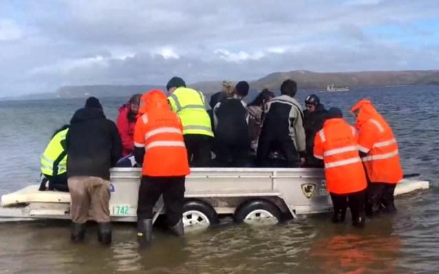Mueren 380 ballenas varadas en Australia y otras 70 son rescatadas