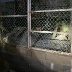Matamoros Tamaulipas GOPES aseguramiento vehiculos aves tigres 18