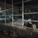Matamoros Tamaulipas GOPES aseguramiento vehiculos aves tigres 22