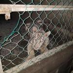 Matamoros Tamaulipas GOPES aseguramiento vehiculos aves tigres 23