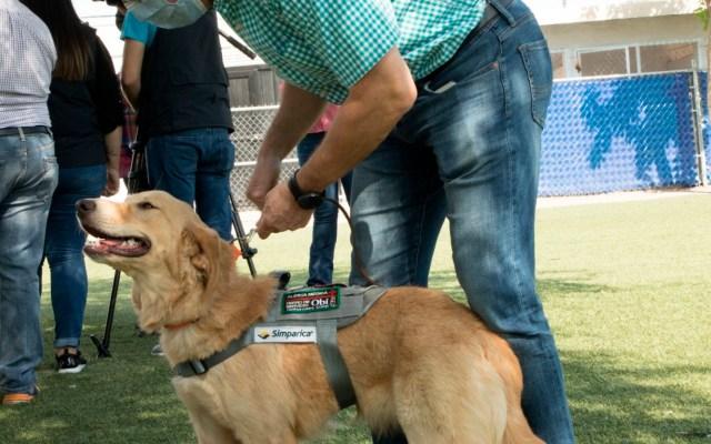 Entrenan a 10 perros en Sonora para detectar COVID-19 - Foto https://www.sonora.gob.mx/