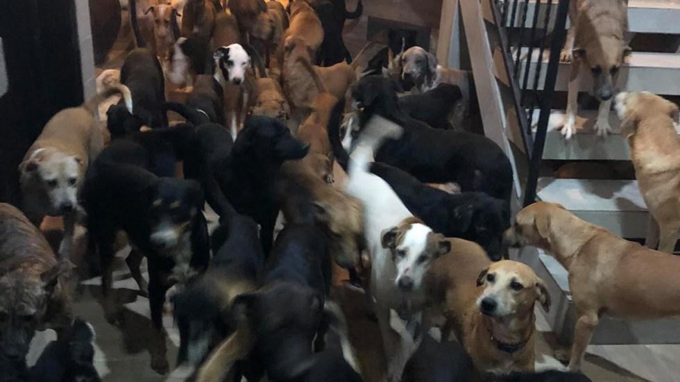 Resguarda rescatista en Cancún a más de 300 mascotas por huracán Delta - Resguardo de animales en casa de rescatista, en Cancún. Foto de @ricardopimentelcordero